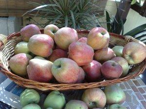 Le mie mele