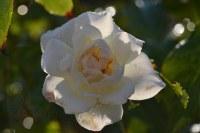 Dal mio giardino