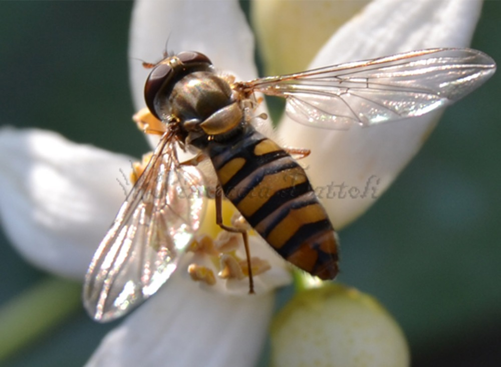 Foto di insetti e altro... (2/6)