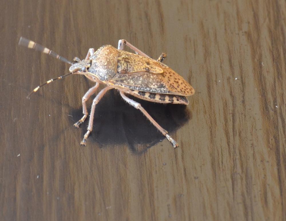 Foto di insetti e altro... (5/6)
