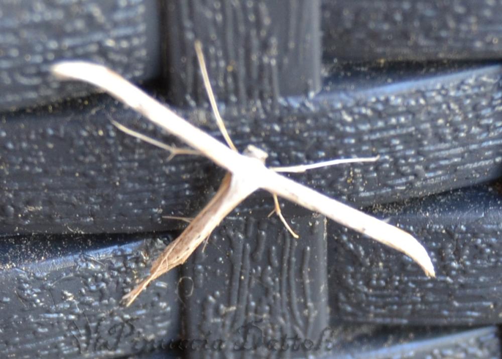 Foto di insetti e altro... (6/6)