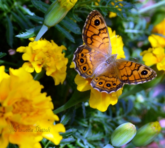 Foto di insetti e altro... (4/6)