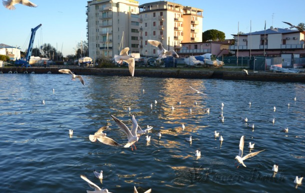 I gabbiani a Porto Garibaldi