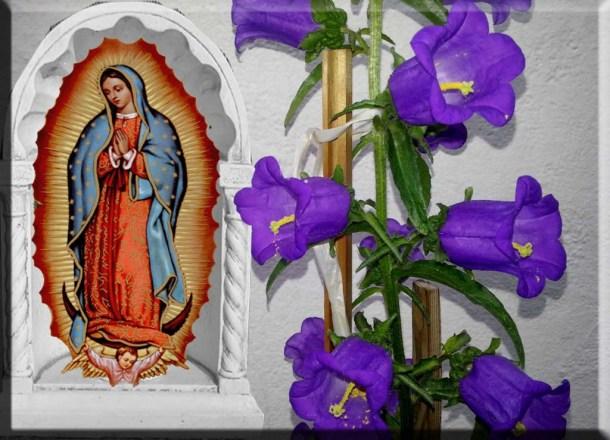 vergine-di-Guadalupe