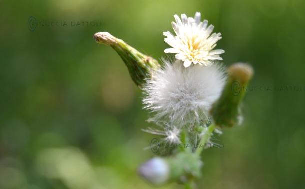 Macro fiore.jpg