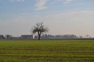 albero nel campo
